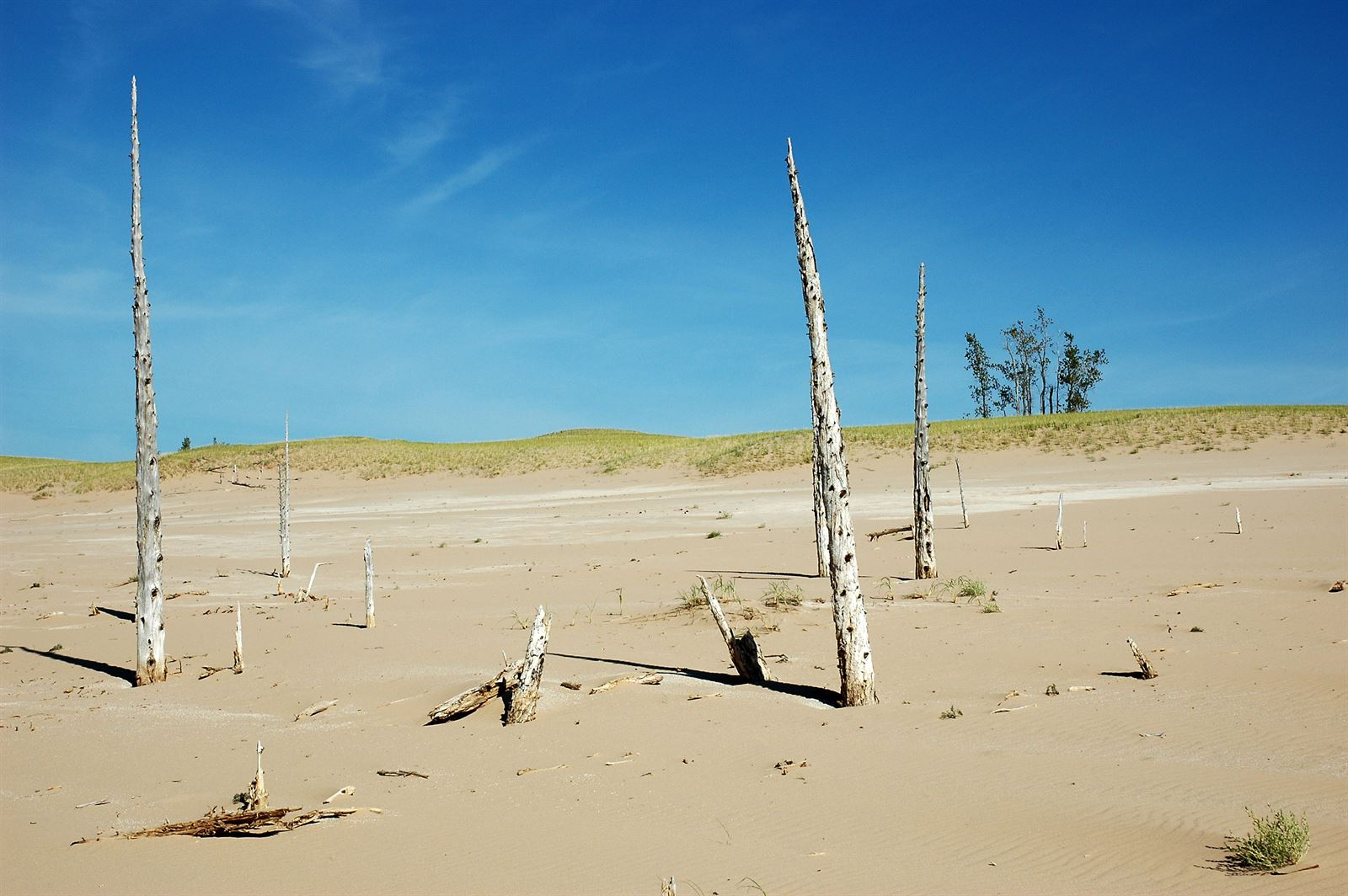 Ghost Forest In Sleeping Bear Dunes